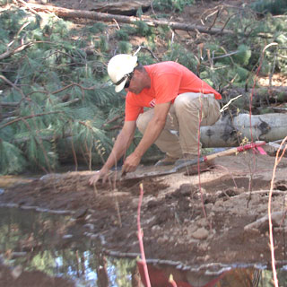 USFS Fishery Biologist Nate Dachtler replanting willows in the raw soil on the banks of Indian Ford Creek.  photo by Jim Anderson